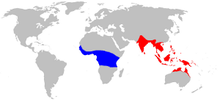 Semut RanggrangOecophylla_range_map