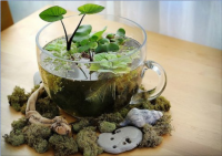 Table-top water garden