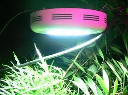 ledgrowlamp