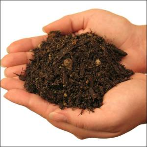 marijuana-soil